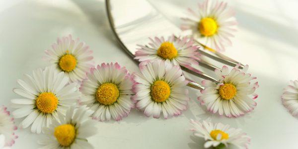 daisy-755517_1920